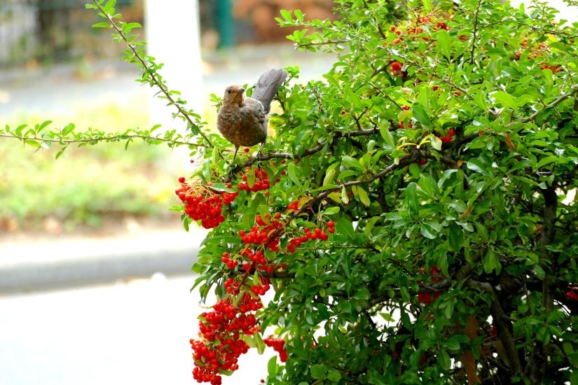 Bonn Birds